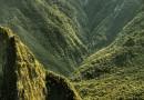 Gesunde Naturheilmittel aus den Wäldern Perus